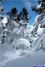 Two snow trees in March., uploaded by Mike-Rix  [Miyagi Zao Sumikawa Snow Park, Zao Town, Miyagi]