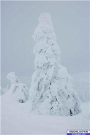 A snow-tree totally covered with snow. I made the photograph in the mountains near Sumikawa Snow Park, where we drove with a snow-mobile., uploaded by Mike-Rix  [Miyagi Zao Sumikawa Snow Park, Zao Town, Miyagi]