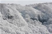 Fresh snow in the trees, uploaded by Minakami photos  [Minakami Kogen Ski Resort, Minakami Town, Gunma]