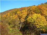 Autumn is my favourite time of year with great weather and an abundance of colour., uploaded by NisekoNow  [Niseko Mountain Resort Grand Hirafu, Kutchan Town, Hokkaido]