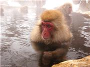Jigokudani Yaen Koen - Snow Monkey Park. 30 min from Shiga Kogen. Photo: Meg Yamagute, uploaded by ShigaKogen