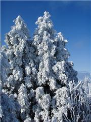 Crystal trees, uploaded by bushpig  [Mizuho Highland, Ohnan Town, Shimane]