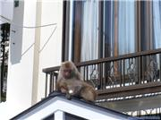 more monkey business, uploaded by hellyer