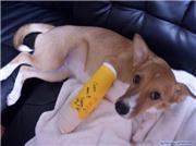 Poor dog :(, uploaded by norcal
