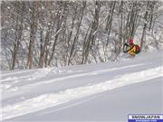 tsugaike kogen ski resort\r\ntsuganomori course, uploaded by schanze  [Tsugaike Kogen, Otari Village, Nagano]